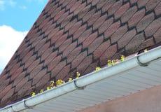Κοινά προβλήματα υδρορροών με το βρύο στη στέγη Στοκ Εικόνα