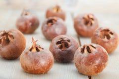 Κοινά φρούτα μουσμουλιών Στοκ Φωτογραφίες