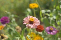 Κοινές εγκαταστάσεις ¼ ŒA ακρών του δρόμου wildflowersï στην άκρη του δρόμου στην Κίνα και την Ασία υπάρχουν όλα τα είδη χρωμάτων στοκ φωτογραφίες