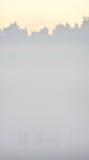 κοινή ανατολή γερανών Στοκ φωτογραφία με δικαίωμα ελεύθερης χρήσης