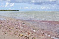 Κοινή μέδουσα στη θάλασσα της Βαλτικής στοκ φωτογραφία με δικαίωμα ελεύθερης χρήσης