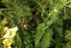 Κοινή σφήκα Vespula vulgaris Στοκ Εικόνες