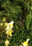 Κοινή σφήκα Vespula vulgaris Στοκ φωτογραφίες με δικαίωμα ελεύθερης χρήσης