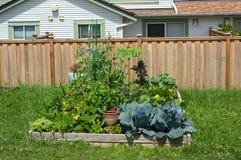 Κοινοτική κηπουρική Στοκ Εικόνα