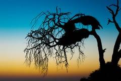 Κοινωνική σκιαγραφία φωλιών υφαντών Στοκ φωτογραφίες με δικαίωμα ελεύθερης χρήσης
