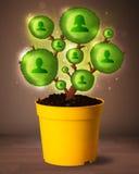 Κοινωνικό δέντρο δικτύων που βγαίνει από flowerpot Στοκ εικόνα με δικαίωμα ελεύθερης χρήσης