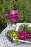 κοινός κήπος εξοχικών σπιτιών peony Στοκ Εικόνες