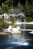 Κοινό δελφίνι bottlenose, ζωολογικός κήπος Στοκ Εικόνες