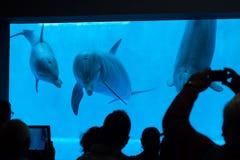 Κοινό δελφίνι bottlenose (truncatus Tursiops) Στοκ εικόνες με δικαίωμα ελεύθερης χρήσης