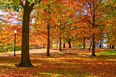 κοινό κήπων της Βοστώνης Στοκ φωτογραφίες με δικαίωμα ελεύθερης χρήσης