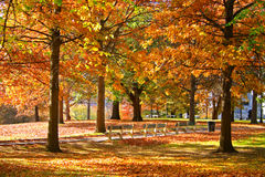 κοινό κήπων της Βοστώνης Στοκ Εικόνες