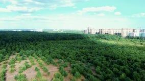 Κοινό και privat κήπος, βρεφικός σταθμός δέντρων πάρκων Θαυμάσιος διακοσμητικός κήπος με τα ανθίζοντας πολύβλαστα δέντρα μια ηλιό απόθεμα βίντεο