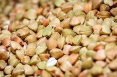 Κοινό σιτάρι φαγόπυρου στοκ φωτογραφία με δικαίωμα ελεύθερης χρήσης