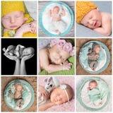 Κοισμένος νεογέννητο κολάζ μωρών Στοκ εικόνα με δικαίωμα ελεύθερης χρήσης
