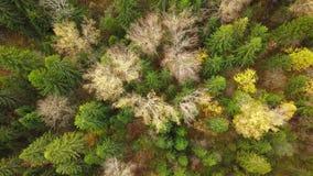 Κοιτάζοντας κάτω στο δάσος των συναρπαστικών χρωμάτων φθινοπώρου, λαμπρότητα πτώσης, εναέριο flyover φιλμ μικρού μήκους