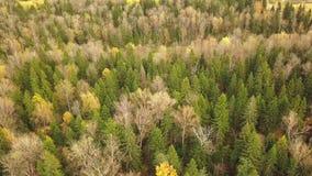 Κοιτάζοντας κάτω στο δάσος των συναρπαστικών χρωμάτων φθινοπώρου, λαμπρότητα πτώσης, εναέριο flyover εναέρια όψη απόθεμα βίντεο