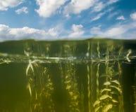 Κοιτάξτε επάνω από το νερό και κάτω από το νερό στη λίμνη Στοκ εικόνες με δικαίωμα ελεύθερης χρήσης