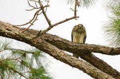 Κοιτάξτε επίμονα κάτω από το πουλί του θηράματος στοκ φωτογραφίες με δικαίωμα ελεύθερης χρήσης