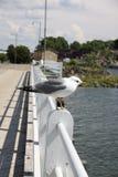 κοιτάξτε Στοκ εικόνες με δικαίωμα ελεύθερης χρήσης