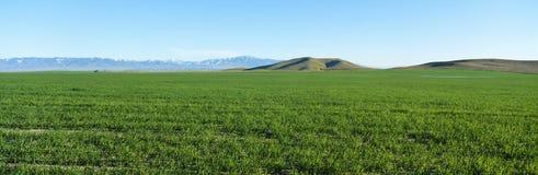 Κοιλάδα άνοιξη, κοιλάδα αντιλοπών, Καλιφόρνια Στοκ Φωτογραφία