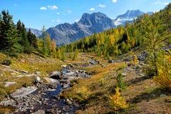 Κοιλάδα αγριόπευκων Στοκ Εικόνες