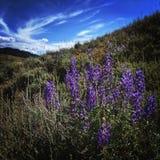 Κοιλάδα Αϊντάχο ήλιων Στοκ φωτογραφίες με δικαίωμα ελεύθερης χρήσης