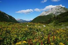 Κοιλάδα βουνών που καλύπτεται από ένα αλπικό άγριο λιβάδι λουλουδιών Στοκ εικόνες με δικαίωμα ελεύθερης χρήσης