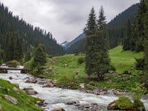 Κοιλάδα βουνών που καλύπτονται με τα δέντρα πεύκων και μια γέφυρα κούτσουρων άνω του θορίου Στοκ φωτογραφία με δικαίωμα ελεύθερης χρήσης