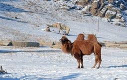 Κοιλάδα δεινοσαύρων στο εθνικό πάρκο Terelj Μογγολία Στοκ φωτογραφία με δικαίωμα ελεύθερης χρήσης
