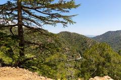Κοιλάδα κέδρων στα βουνά της Κύπρου Στοκ Φωτογραφία