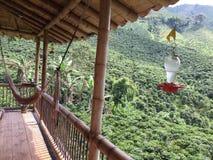 Κοιλάδα καφέ της Κολομβίας πράσινη Στοκ Εικόνα