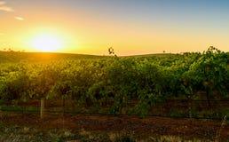 Κοιλάδα κρασιού στο ηλιοβασίλεμα Στοκ Εικόνες