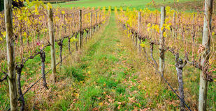 Κοιλάδα κρασιού φθινοπώρου Στοκ εικόνες με δικαίωμα ελεύθερης χρήσης