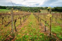 Κοιλάδα κρασιού φθινοπώρου Στοκ Εικόνες