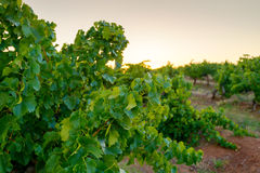 Κοιλάδα κρασιού Στοκ Φωτογραφία
