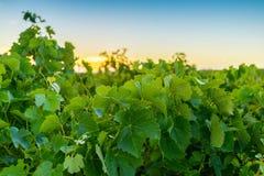Κοιλάδα κρασιού Στοκ εικόνες με δικαίωμα ελεύθερης χρήσης