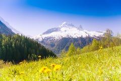 Κοιλάδα με τις κίτρινες πικραλίδες κοντά στη Mont Blanc Στοκ Εικόνες