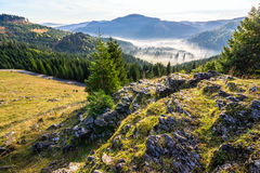 Κοιλάδα με το δασικό σύνολο κωνοφόρων της ομίχλης στο βουνό Στοκ εικόνα με δικαίωμα ελεύθερης χρήσης