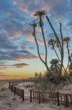 Κοιλάδα σαβανών Arava με τους ενδημικούς φοίνικες doum Στοκ Εικόνες