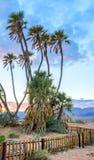 Κοιλάδα σαβανών Arava με τους ενδημικούς φοίνικες doum Στοκ Φωτογραφία