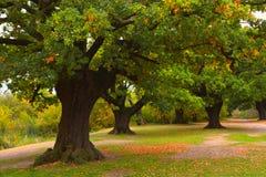 Κοιλάδα φθινοπώρου στο δάσος Στοκ Φωτογραφία