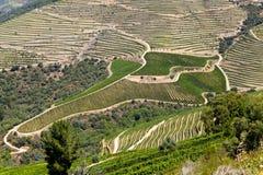 Κοιλάδα Douro Στοκ Εικόνες