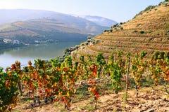 Κοιλάδα Douro στοκ εικόνες με δικαίωμα ελεύθερης χρήσης