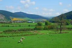 Κοιλάδα Innerleithen και τουίντ που φαίνεται ανατολή στοκ εικόνες