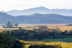 κοιλάδα napa Καλιφόρνιας στοκ εικόνες με δικαίωμα ελεύθερης χρήσης