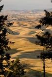 Κοιλάδα Palouse, ανατολικό πολιτεία της Washington Στοκ Φωτογραφία