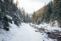 Κοιλάδα Strazyska κοντά σε Zakopane, Πολωνία Στοκ φωτογραφίες με δικαίωμα ελεύθερης χρήσης