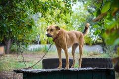 Κοκκινομάλλες μιγία σκυλί στη στέγη του θαλάμου του στοκ εικόνες