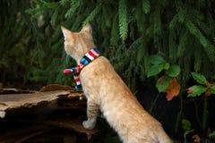 Κοκκινομάλλες γατάκι στο ριγωτό μαντίλι κάτω από το δέντρο, εξετάζοντας την απόσταση, που στέκεται στα οπίσθια πόδια Στοκ εικόνα με δικαίωμα ελεύθερης χρήσης