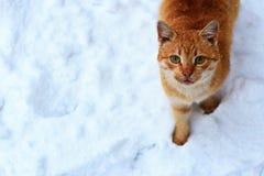 Κοκκινομάλλης άστεγη γάτα Στοκ φωτογραφίες με δικαίωμα ελεύθερης χρήσης